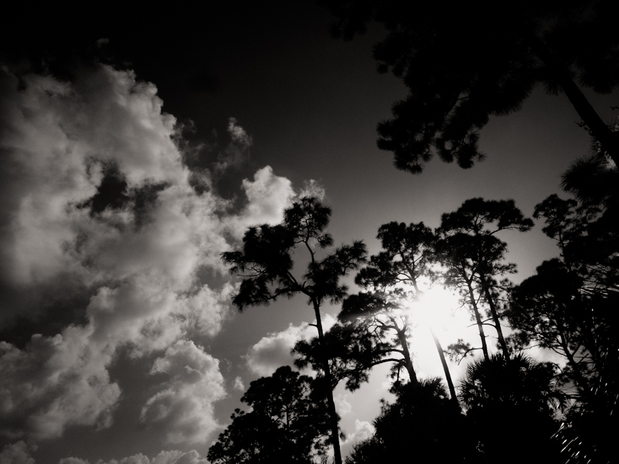 sun behind trees-1