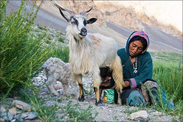 Zanskar-India-Photography-15