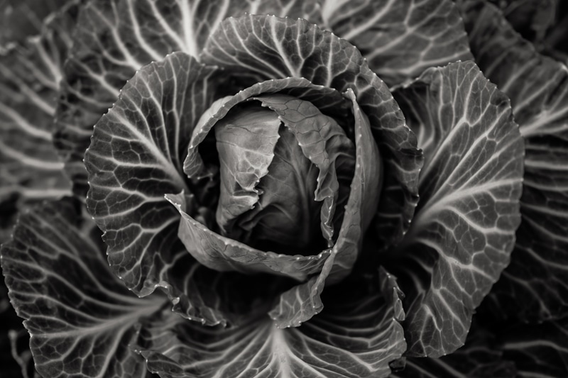 a black and white closeup shot of lettuce