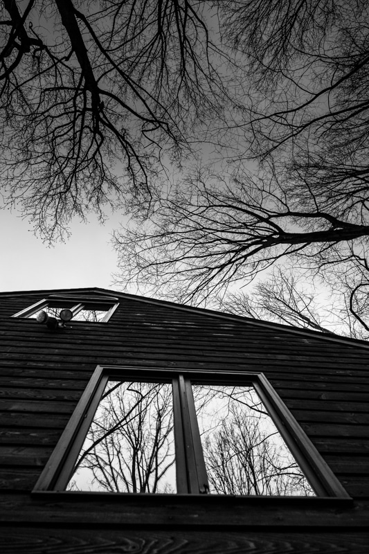 reflected trees on a window in black and white