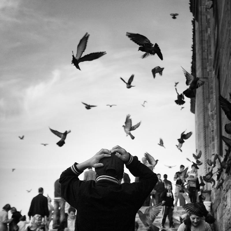 010 birdy