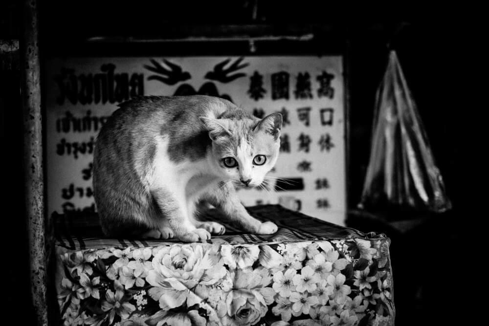 chiang mai street photography 21